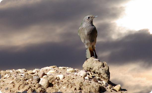 tornade et oiseau