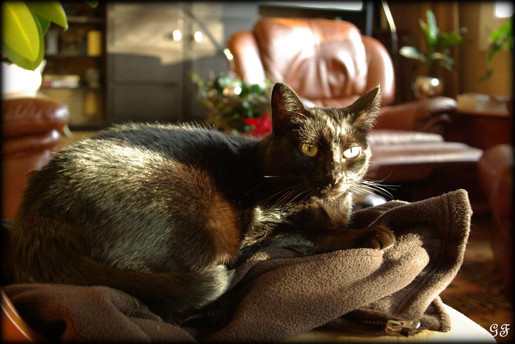 Un d fi entre nous animal de compagnie propos par ambre - Mon chat me colle plus que d habitude ...