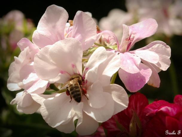 Dédé et ses abeilles | le bon coté des choses