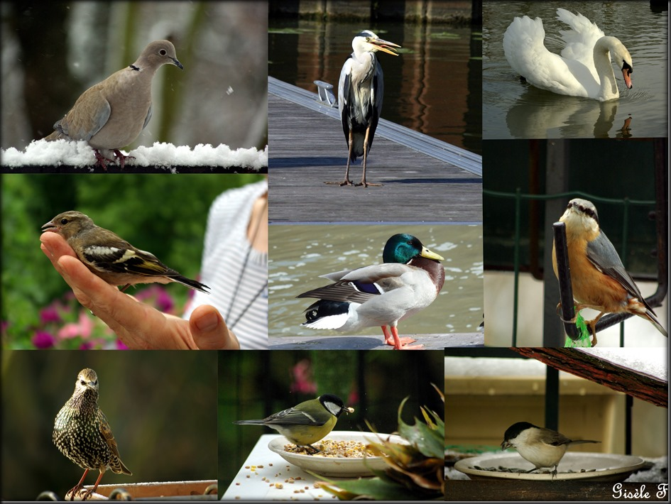 oiseaux lundi soleil