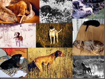 nos chiens_thumb[2]