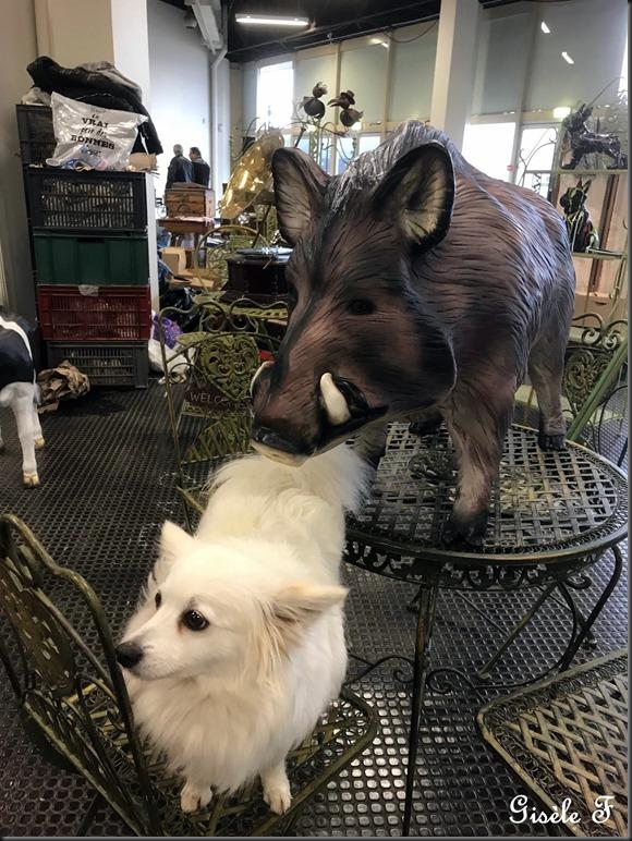 chien et sanglier