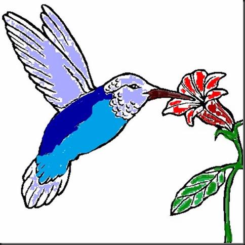 colibri colorié