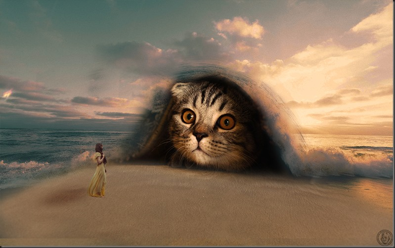 chat-plage