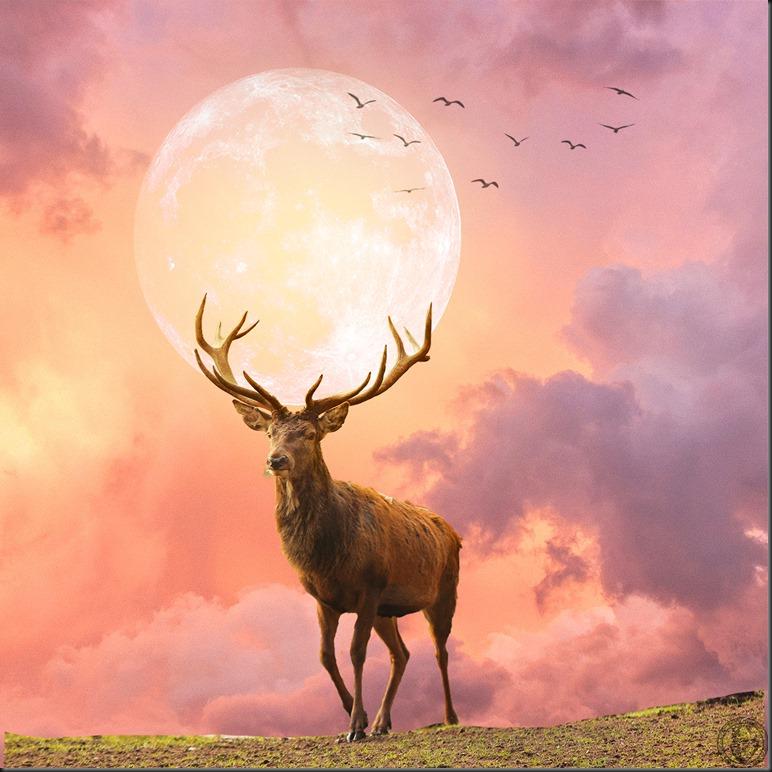 cerf-lune