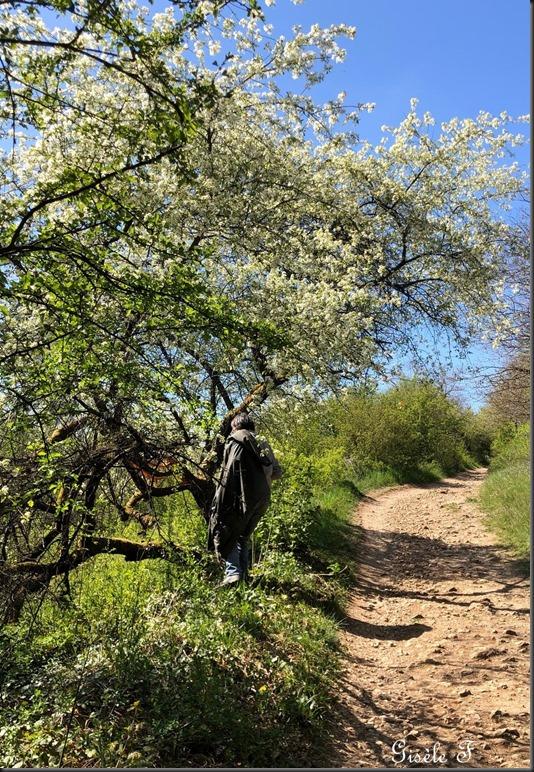 arbre au st Quentin